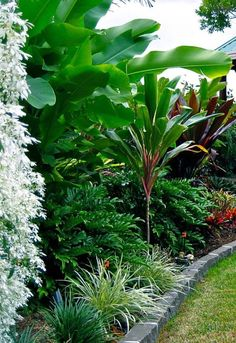The Ultimate Revelation Of Tropical Landscaping 65 garden design Front Garden - Tropical But Beachy Tropical Garden Design, Tropical Landscaping, Garden Landscape Design, Front Yard Landscaping, Landscaping Ideas, Tropical Gardens, Tropical Plants, Landscaping Software, Landscape Designs