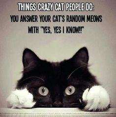 Well I'm a crazy cat lady and I love it