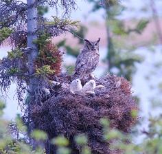 Alaska - Tetlin National Wildlife Refuge