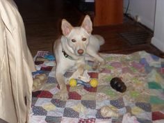 This is Gracie my foster failure.The day I took her to be spayed and enter her into the prison program I came home and everyone including my other dogs let me know she was not going anywhere.She is a special girl and PSP sure does supply her with her many needed toys.