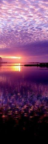 Purple sky sunset**.