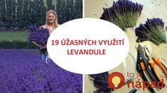 Zlikviduje vši, odstráni pleseň, vylieči herpes: 19 využití levandule, ktoré by mal poznať každý, kto ju pestuje! Lavender, Health, Health Care, Healthy, Lavandula Angustifolia, Salud