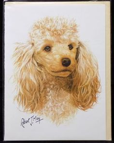 Blank Card with Envelope by Robert May - Apricot Poodle