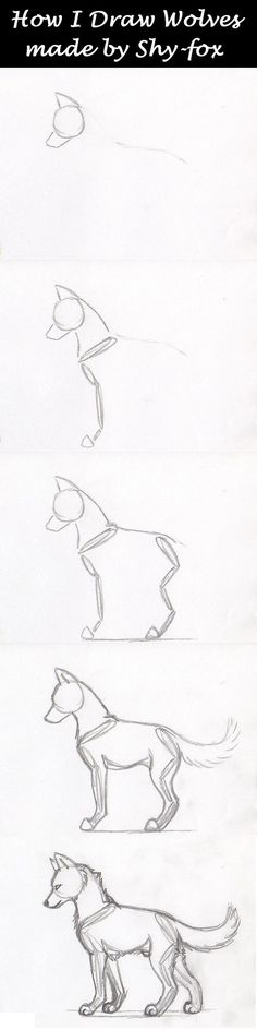 "sketches step by step well yeah this is how I draw my wolves (and all other animals) I first draw their ""skeleton"" and next start giving the wolf some meat around his skeleton a real wolf skeleton > hope this is usef. Pencil Art Drawings, Art Drawings Sketches, Easy Drawings, People Drawings, Drawing People, Animal Sketches, Animal Drawings, Drawing Animals, Wolf Drawings"