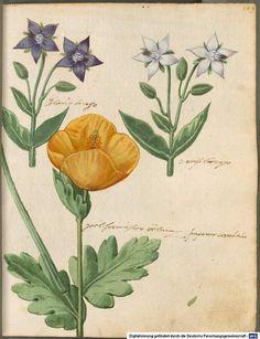 Hortulus Monheimensis - BSB Cod.icon. 31 [S.l.] Süddeutschland 1615