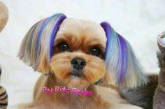 -repinned-Creative dog grooming- Shih Tzu