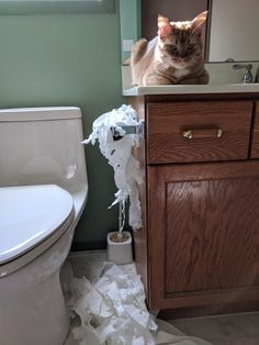 Locked my cat in the bathroom while I made a meal because he was being annoying. Revenge was had.