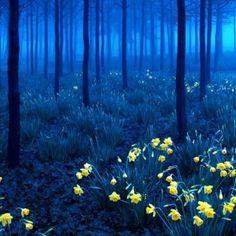 Kobalt Forest
