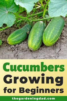 Cucumbers Growing for Beginners - Learn How to Easily Grow Cucumbers indoors and in your garden with these beginner tips, tricks, and - Vegetable Garden Design, Diy Garden, Fruit Garden, Garden Care, Edible Garden, Lawn And Garden, Garden Projects, Kitchen Garden Ideas, Kitchen Gardening