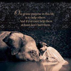 私たちがこの世で生きていく最大の目的は、 他の者たちを助けることです。 そして、もしあなたが他者を助けられないのだとしたら、 少なくとも他者を傷つけないでください。 by マハトマ・ガンジー