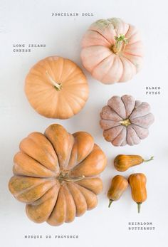 TYPES OF PUMPKIN.  THIS IS A GREAT GRAPHIC ILLUSTRATION