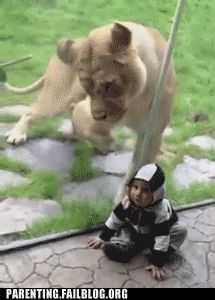 silly lion