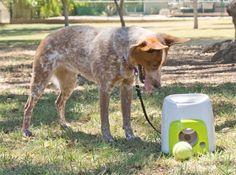 Original iFetch Dog Toy