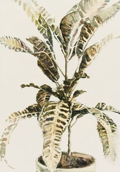 stylist design house plant seeds. Dane Lovett  Plants Pin by Vicky Trainor The Linen Garden on cotton seed chalk