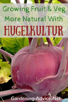 Huegelkultur is a form of raised bed with timber, branches or shrubs as the core. The Wood then is covered by grass sods and top soil. The height and size can be varied due to ones need.