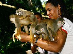 monkey madness.