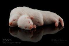 The Babies by mark-johnson #animals #animal #pet #pets #animales #animallovers #photooftheday #amazing #picoftheday