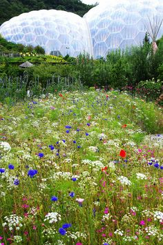 Wild flower meadow at the Eden Project.