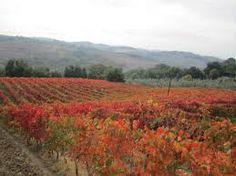 Frascati è vino e paese - Vino - World Wine Passion