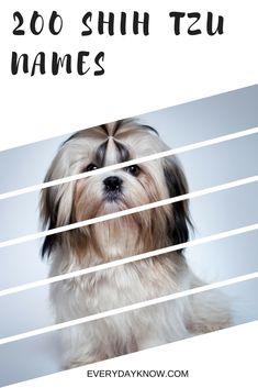 200 Shih Tzu Names Dog Names Male Dog Names Shih Tzu