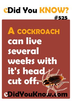 A cockroach can live several weeks with it's head cut off.  eDidYouKnow.com