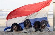 DuinDonder, de website over de schapendoes in Noordwijkerhout