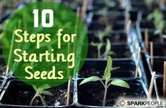 A Beginner's Guide to Starting Seeds Indoors #spring #gardening | via @SparkPeople