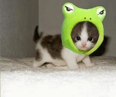 I'm  froggy  and I know it !!!!!!!!!!!!!!!!!!!!!!!!!!!!!!!!!!!!!!!!!!!!!!!!!!!!!!!!!!!!!!!!!