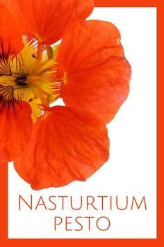 Who knew? This simple recipe for nasturtium pesto will surprise you with the fresh flavor and huge taste with little effort. Best Gluten Free Recipes, Easy Recipes, Gluten Free Kitchen, Salad Spinner, How To Make Pesto, Carrot Top, Free Friends, How To Attract Birds, Pesto Recipe