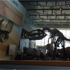 Dinosaur skeletons @ MD Science Center!