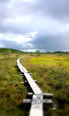 August, Torronsuo National Park, Finland - Torronsuo elokuussa Lappland, Roads And Streets, Hiking Photography, Baltic Sea, Best Cities, Wilderness, Norway, Paths, National Parks