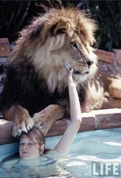 A very young Melanie Griffith with one of mother Tippi Hedren's lions, photographed by Michael Rougier for LIFE magazine.