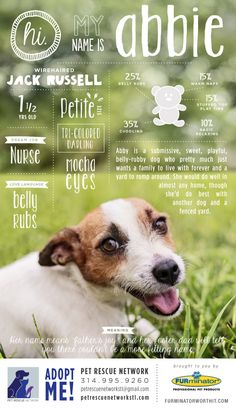 Fantastic idea for marketing adoptables! Pet adoption poster series by Crystal Buckey.
