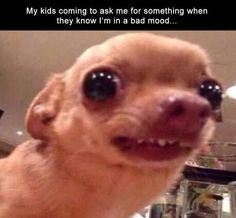 favour, parenting, annoyed Nothing Beats Good Fresh Animal Memes - World's largest collection of cat memes and other animals Funny Animal Jokes, Cute Funny Animals, Funny Cute, Funny Dog Faces, Funny Dogs, Cute Dogs, Dog Memes, Funny Memes, Funny Sayings