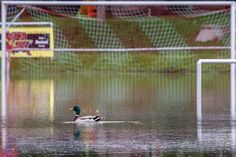 A duck swims on a flooded football pitch in Germany.
