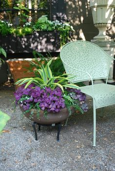 love the bright green of the Dracaena with the deep purple Oxalis Triangularis nature knows best! Container Flowers, Flower Planters, Container Plants, Container Gardening, Unusual Garden Ornaments, Oxalis Triangularis, Indoor Gardening Supplies, Backyard Garden Design, Backyard Retreat