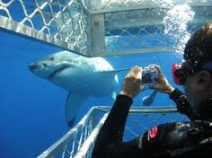 White shark cage diving - Gansbaai -South Africa