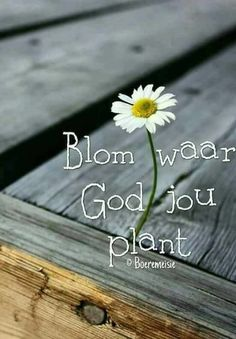 Bloom where God plants you Mom Prayers, Bible Prayers, Bible Scriptures, Bible Quotes, Qoutes, Church Backgrounds, Jesus Our Savior, Afrikaanse Quotes, Goeie Nag