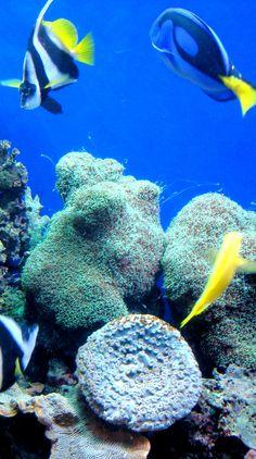 Top aquariums in USA!