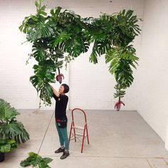 This was one of our first and still a favourite of our monstera arches! @wonabae adding the finishing touches! It was a real bonus to be able to use banana flowers with this one! #plants #looseleafprojects