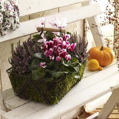 Stimmungsvolle Herbstdeko basteln Vor der Tür darf Herbstdeko natürlich auch nicht fehlen. Gestalten Sie ganz flink einen Korb mit Moos, Heide und Alpenveilchen.- Wohnidee