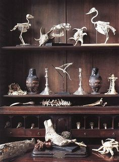 Collection of skeletons and skulls / Curiosity cabinet Curiosity Cabinet, Ross Geller, Cabinet Of Curiosities, Natural Curiosities, Animal Bones, Chandler Bing, Vanitas, Animal Skulls, Animal Skeletons