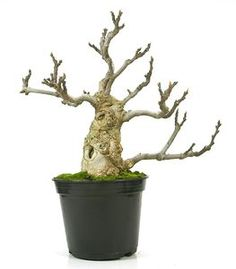 134032 Ficus, Cactus Plants, Natural, Beautiful, Plants, Cacti, Cactus, Figs, Fig