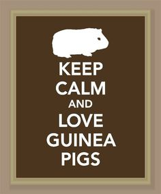 What Can Guinea Pigs Eat? – The Guinea Pig Safe Food List