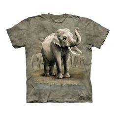 Asian Elephants | Dedoles.cz