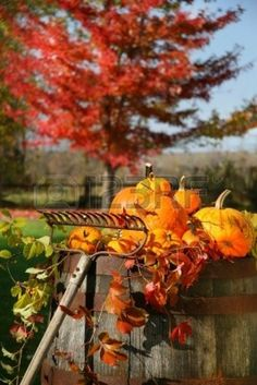 Autumns colorful harvest with beautiful red maple tree in background