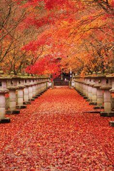 「紅葉を見に行きたくなる!日本の美しい紅葉画像集☆」のまとめ枚目の画像|MERY [メリー]