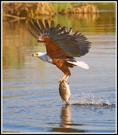 nice catch...