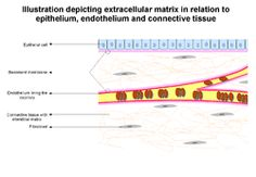 its sad we only use this on animals. its potential for in humans is remarkable. (you can grow new tissue back without scar tissue)  Extracellular Matrix.png