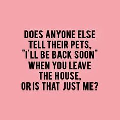 36 Funny Quotes And Sayings. Single Mom Meme Ideas of Single Mom Meme - Single Mom Ideas - Ideas of Single Mom Ideas - 36 Funny Quotes And Sayings. Single Mom Meme Ideas of Single Mom Meme 36 Funny Quotes And Sayings. Yorkies, Chihuahuas, Westies, Dachshunds, Crazy Cat Lady, Crazy Cats, Crazy Dog, Lilo E Nani, Pet Sitter